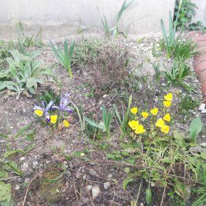 Frühlingserwachen am KANT: Die ersten Frühblüher sind da